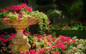 Stwórz oryginalny ogród z odpowiednimi wzmocnieniami na podmokłym terenie. Jak…
