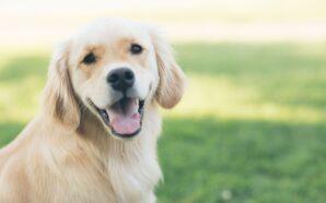 Artykuły dla psa w mieszkaniu
